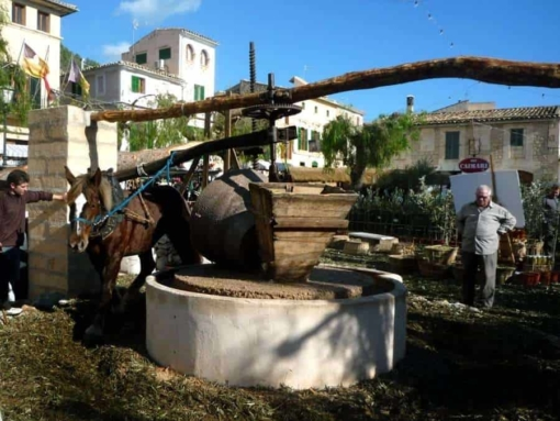 Caimari Horse Olive | Besttransfers Mallorca